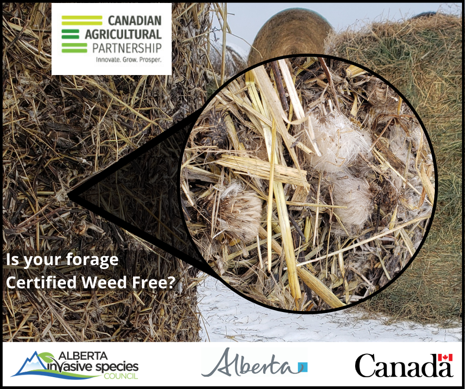 AISC Weed-Free Forage